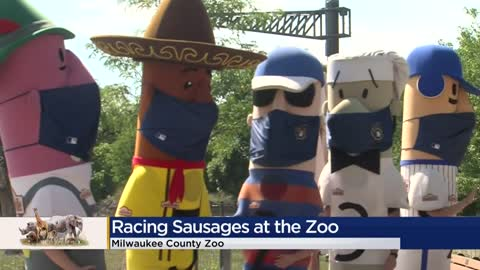 Famous Racing Sausages take part in race at Milwaukee County...